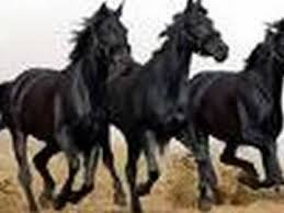 Black Mustang Horse Beautiful Black Horses Youtube
