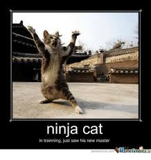 Ninja Meme - ninja cat in trainning just saw his new master meme on esmemes com