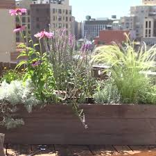 window box planter tips planters window and box