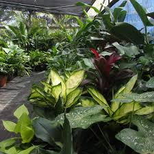 native plant nursery brisbane the plant factory outlet brisbane