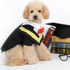 dog graduation cap and gown awesome dog cap and gown costume contemporary wedding gowns for