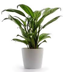 topfpflanzen balkon topfpflanze jpg