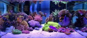Floating Aquascape Reef2reef Saltwater And Reef Aquarium Forum - mixed reef reef aquarium inspiration pinterest bangkok