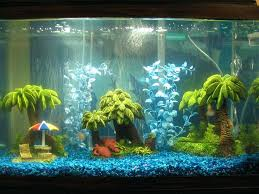 fish tank decoration ideas for cichlids best images on tanks
