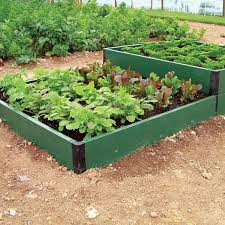 guide to growing patio fruit and vegetables suttons gardening