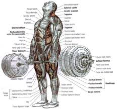 What Muscle Do Bench Press Work What Does A Bench Press Work Best Benches