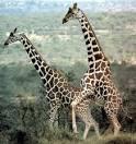 animales en celo salvajes