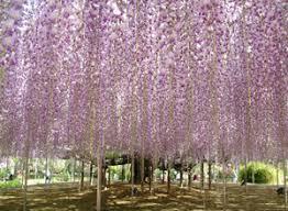ashikaga flower park ashikaga city tourism association