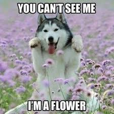 Meme Wolf - wolf meme funny image photo joke 06 quotesbae