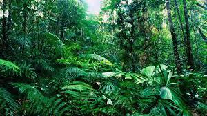 rainforest wall mural australia wall murals you ll love the jungle theme on your room wallpaper mural ideas