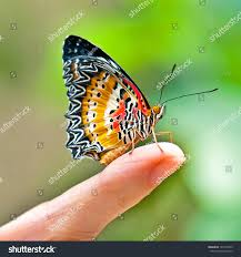 monarch butterfly on finger touch stock photo 149273339