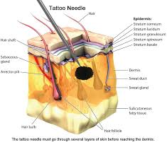3 tattoo healing stages and precautions new health advisor