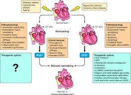 myocardial reverse remodeling how far can we rewind heart and