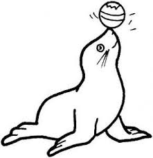 12 best monk seal colouring pages images on pinterest coloring