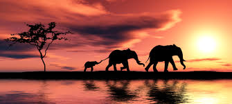 diet to be cancer free like elephants happy love