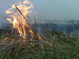 native plants in kansas kids cows and grass why do ranchers burn their pastures five