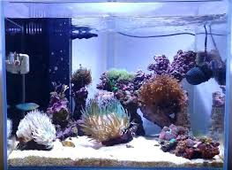 Reef Aquarium Lighting Reef Led Lighting Reviews U2013 Kitchenlighting Co