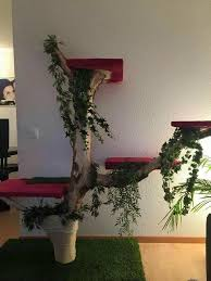 design katzenbaum 23 best katze images on cat trees cats and cat furniture