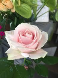 Fleurs Pour Fete Des Meres Fête Des Mères Archives Presqu U0027île Fleurs