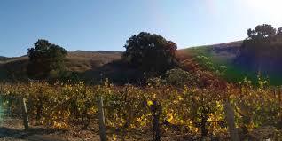 santa barbara santa rita hills wine trail visit california