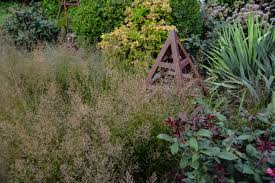 ornamental grasses thinking outside the boxwood