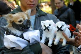 Halloween Costume Ideas For Pets Halloween Fuzzy Today