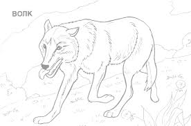 animal pictures coloring pages glum me