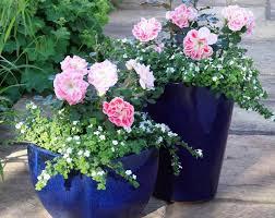 small apartment garden ideas cori u0026matt garden