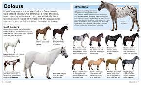 pocket eyewitness horses na 9781409324829 amazon com books