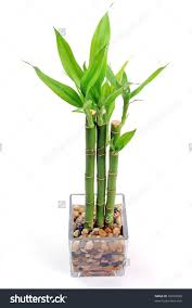 Cute Plant by Bamboo Plant Pot 105 Cute Interior And Save To A Lightbox Rseapt