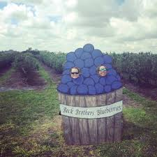 beck brothers blueberries u pick home facebook