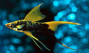 freshwater tropical fish guide
