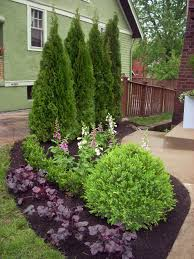 fresh green pine cones in small backyard landscape ideas with