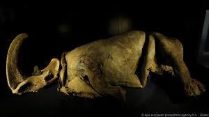 bbc earth amazing mummified animals ice age