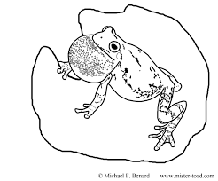 making herpetological coloring pages kids mister toad
