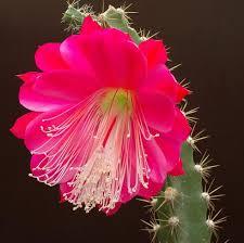 www flowers flower