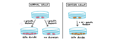 Is Hair Loss A Sign Of Cancer Cancer Video Cell Division Khan Academy