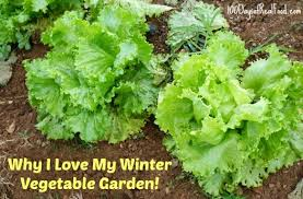 8 reasons i love my winter vegetable garden 100 days of real food