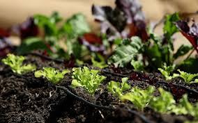 for growing an organic vegetable garden