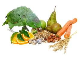 loveyourparrot com healthy foods to feed