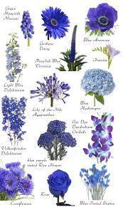 Flowers By Violet - flower names by color flower flowers and gardens