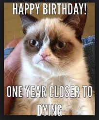 Grumpy Cat No Memes - 338 best grumpy cat images on pinterest funny kitties grumpy cat