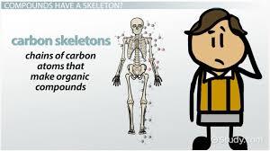 what is a carbon skeleton video u0026 lesson transcript study com