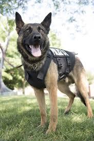 belgian malinois vest nonprofit donates five vests for frederick police k 9 dogs cops