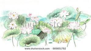 lotus sketch stock images royalty free images u0026 vectors
