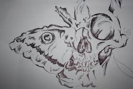 biro butterfly and skull by charliebissett on deviantart