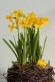 234 best garden bulbs planting ideas images on pinterest garden