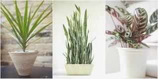 plants low light fresh bathroom plants forthroomsating design gorgeous low light