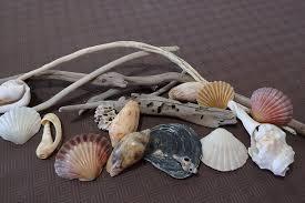 home decor driftwood and seashells 1 free postage