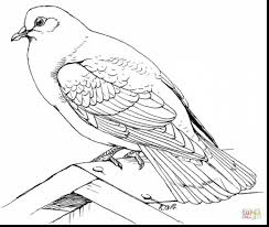 fantastic rock dove coloring page with dove coloring page